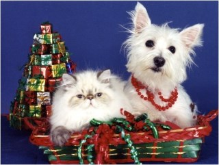 Pet Star Christmas Cards - West Highland White Terrier & Cat