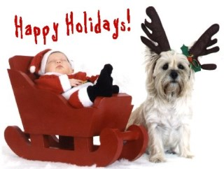 Pet Star Christmas Cards - Cairn Terrier & Santa's Helper