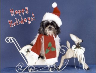 Pet Star Christmas Cards - Shih-tzu