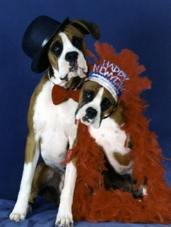 Pet Star Christmas Cards - Boxer
