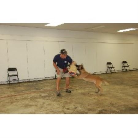 Dog Training And Boarding Tulsa