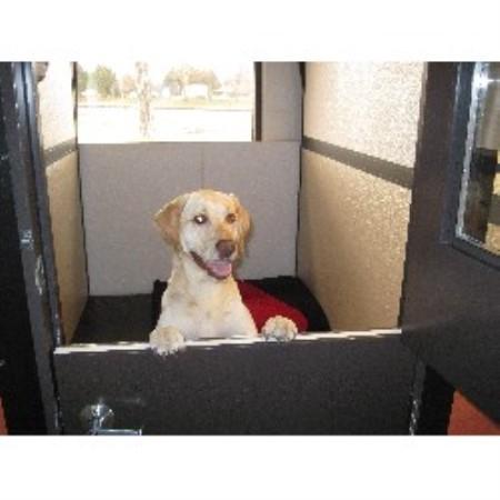 Best Dog Groomer Longmont