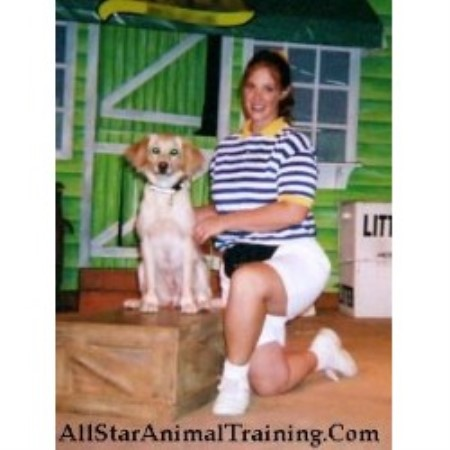 All Star Animal Training Cleveland, Ohio Picture 2