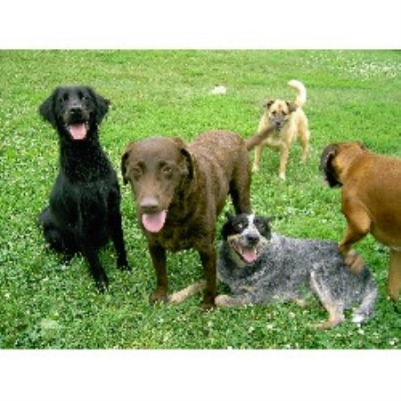 Bed & Biscuit Doggie Daycare And Boarding Sioux City