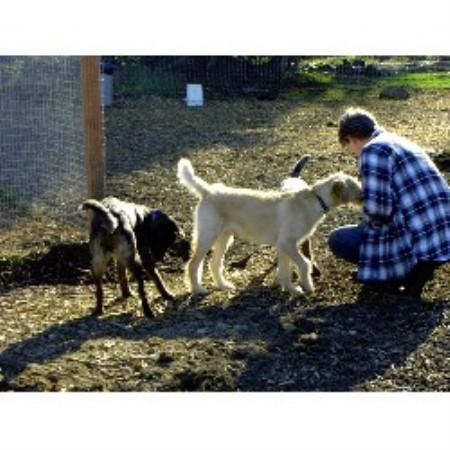 Dog Grooming Marysville Wa