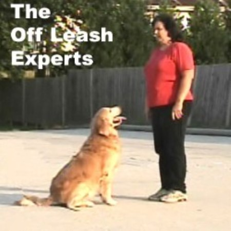 Jcm's All Breed Dog Obedience School & Pet Boarding Facility