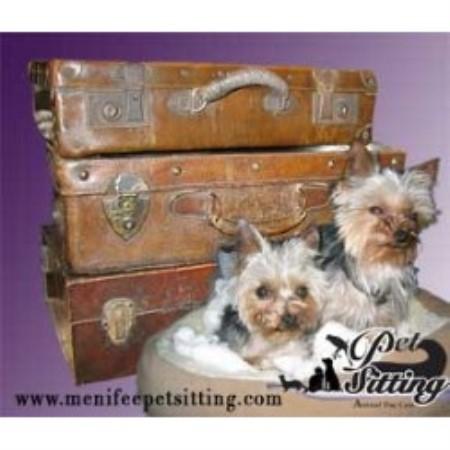 Dog Boarding Menifee