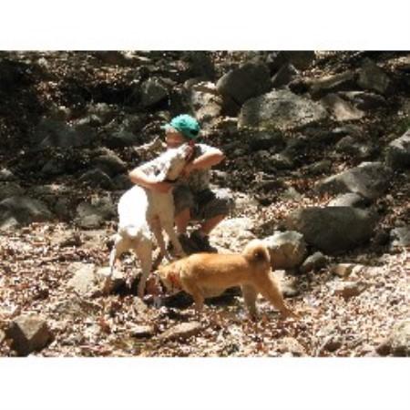 Dog Boarding Sierra Vista