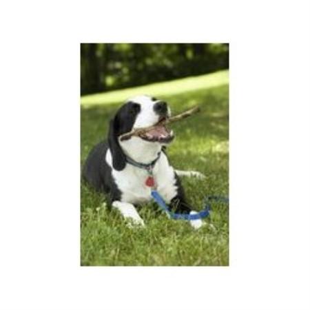 Dog Grooming Hampton Nh