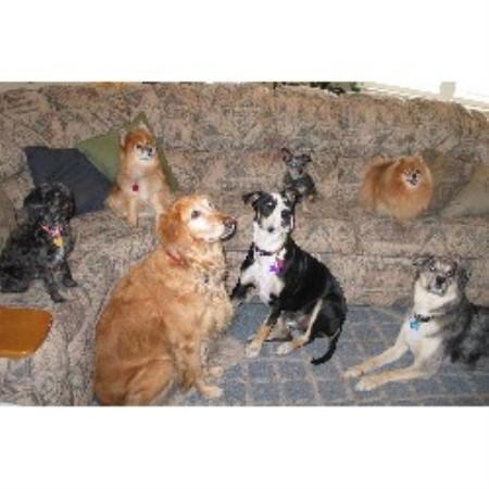 Dog Boarding Price Utah