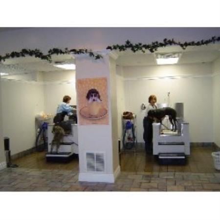 Pet spa boarding grooming amp self service ogden utah 84405 pet spa boarding grooming self service solutioingenieria Choice Image
