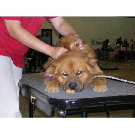 Adas Dog Grooming Service