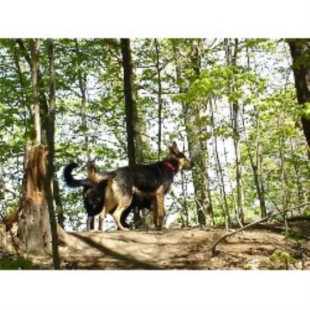Dog Boarding Business For Sale Ontario