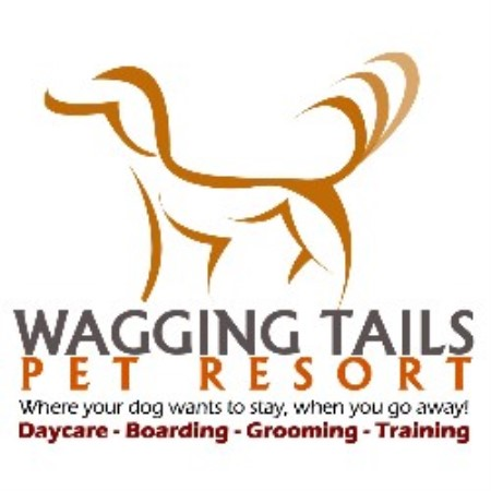 Dog Wagging Tail Wagging tails pet resort