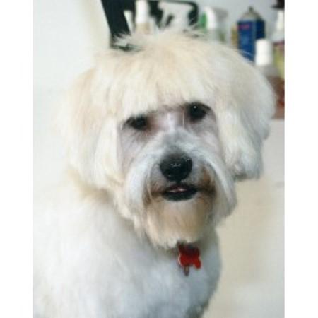 Best Dog Groomer Hoboken