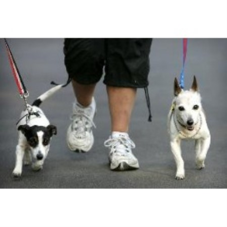 Christine's Dog Walking Service Hillsborough