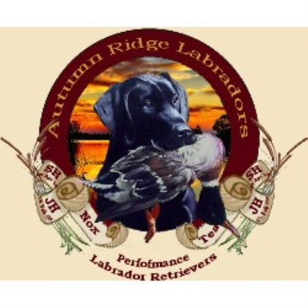 Autumn Ridge Labradors Alanson
