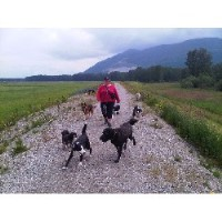 Hiking Hound Dog Walking Services Abbotsford British Columbia Logo