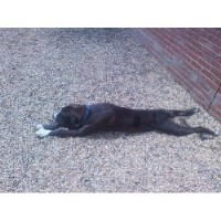 Dog Kennels Near Baltimore