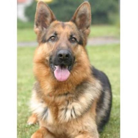 Protection Dog Training Indiana