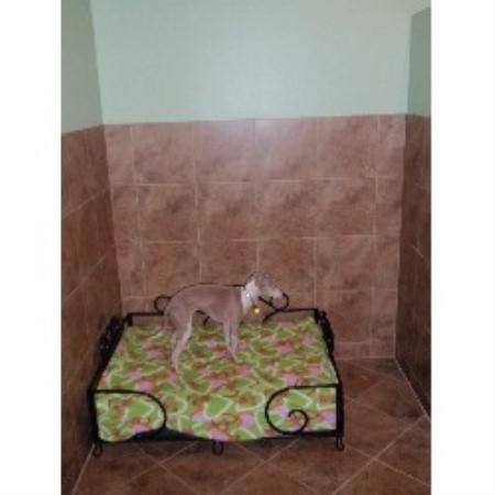 Lush Puppy Pet Resort Jupiter Florida 33458