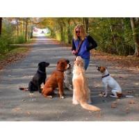 Dog Kennels Near Berwick