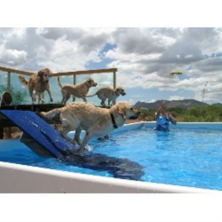 Service Dog Training Sierra Vista Az