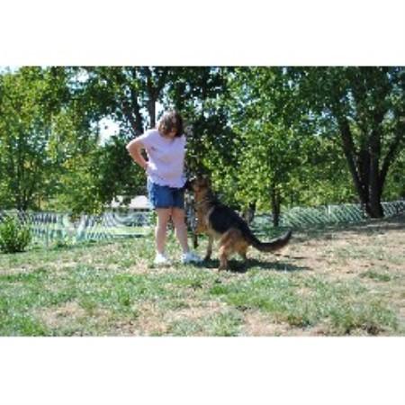 Kansas City Dog Training Boarding