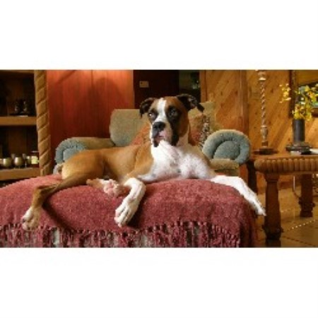 Pawsitively Love West Palm Beach Reviews