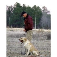 Cedar Swamp Retrievers Lamar South Carolina Logo