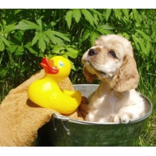 Rhonda S Dog Grooming
