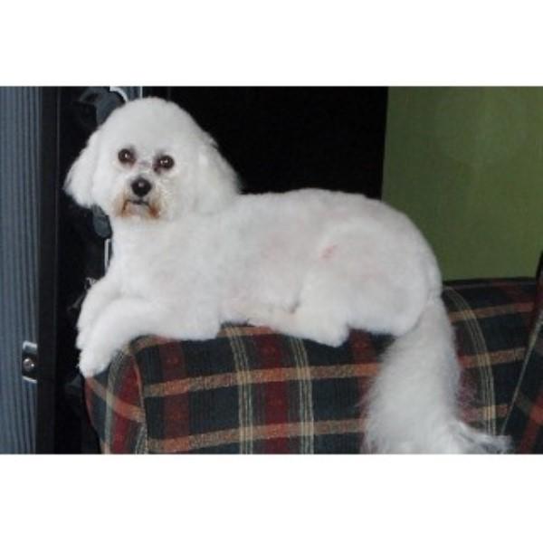 dog grooming nampa