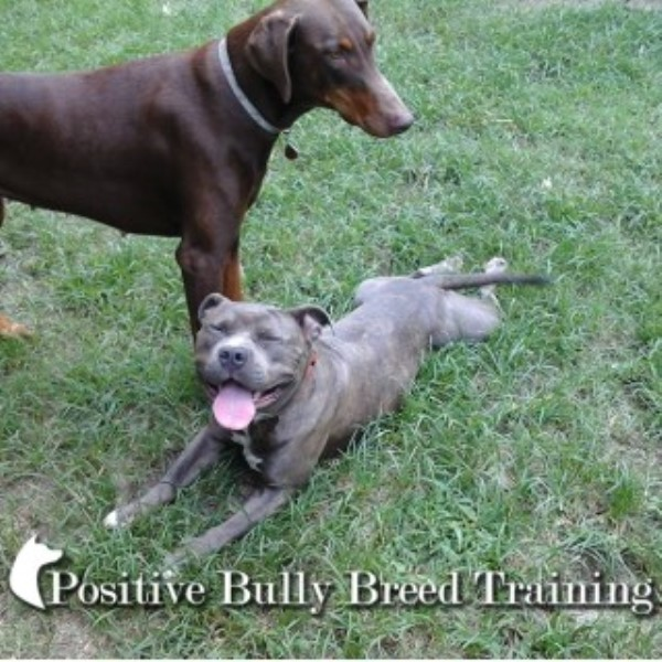 Boarding Dogs Fayetteville North Carolina