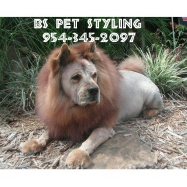 B's Pet Styling Pompano Beach