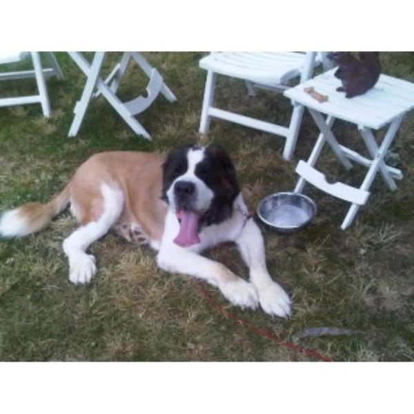 Dog Trainer Reviews Nj