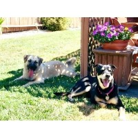Pampered Pooches Doggy Daycare & Boarding American Canyon California Logo