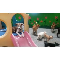 FREEPLAY DOGS Dog DayCare, Cageless Boarding, Dog Grooming, Indoor Dog Park Concord California Logo