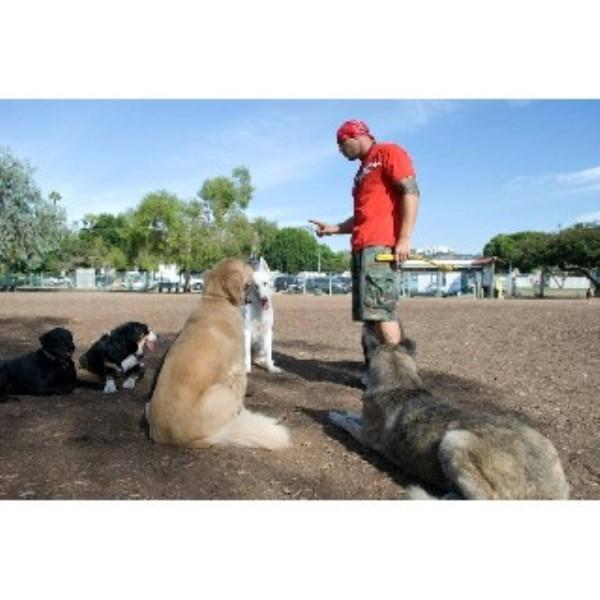 Boarding Dog Training Medford Oregon