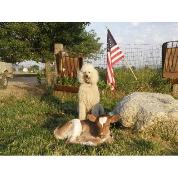 Happy Trails Pet & Livestock Services Tehachapi