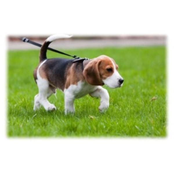 Dog Training Fergus Ontario