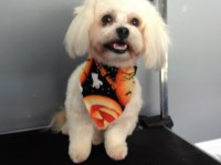 Jackies mobile dog grooming mission viejo California Logo