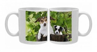 Photo Mug of JD-22183 DOG. Jack russell terrier and parson jack russell terrier puppy in a