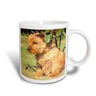 3dRose Norfolk Terrier Mug, 11-Ounce