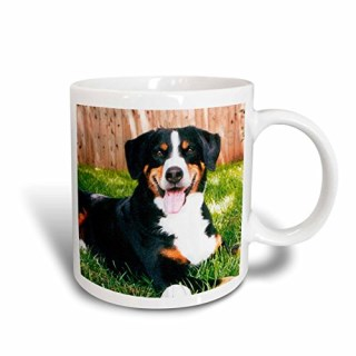 3dRose Appenzeller Mountain Dog Mug, 11-Ounce
