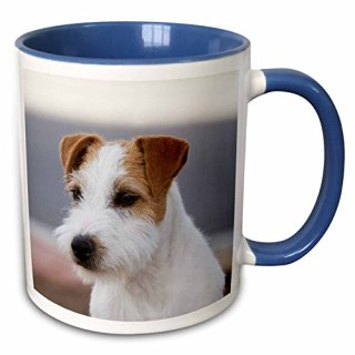 3dRose Danita Delimont - Dogs - Parson Russell Terrier - NA02 PWO0133 - PiperAnne Worcester - 11oz Two-Tone Blue Mug (mug_140370_6)