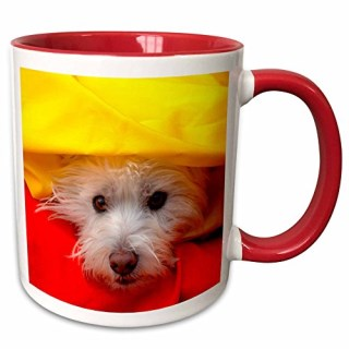 3dRose Danita Delimont - Dogs - West Highland White Terrier peeking out of yellow, MR and PR, - 11oz Two-Tone Red Mug (mug_209744_5)