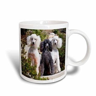 3dRose mug_192385_2 USA, California Three Standard Poodles Sitting Together Ceramic Mug, 15 oz, White