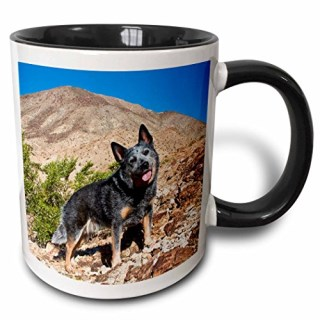 3dRose mug_88799_4 Australian Cattle Dog US05 ZMU0118 Zandria Muench Beraldo Two Tone Black Mug, 11 oz, Black/White