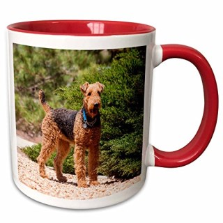 3dRose 230293_5 Airedale Terrier Standing by Juniper Bush Two Tone Mug, 11 oz, Red/White