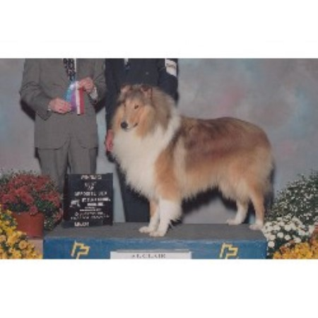 Collie breeder Clio 2488